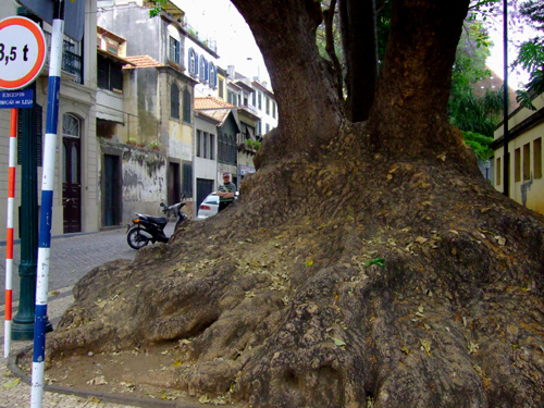 Roots (Funchal, 2008)